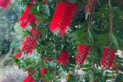 gradina-botanica-creta-10