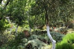 gradina-botanica-creta-4