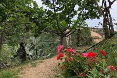gradina-botanica-creta-7
