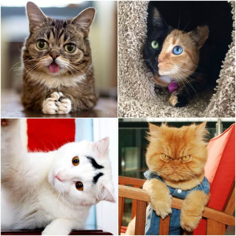 colaj-pisici
