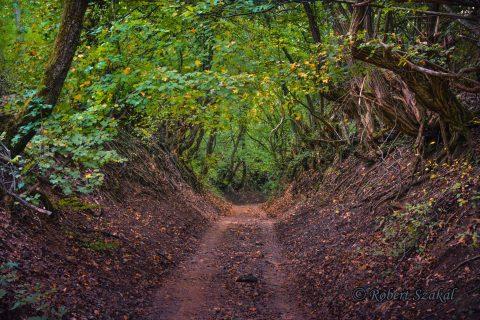 muntii banatului parcul national cheile nerei-beusnita Robert Szakál