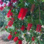 Grădina Botanică din Creta, născută din cenuşă