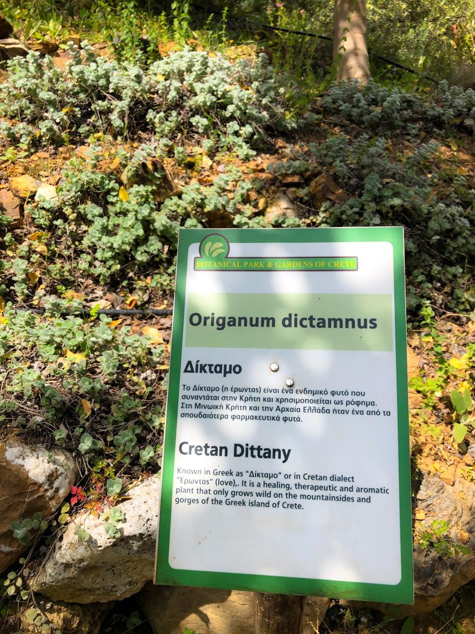 planta endemica gradina botanica creta