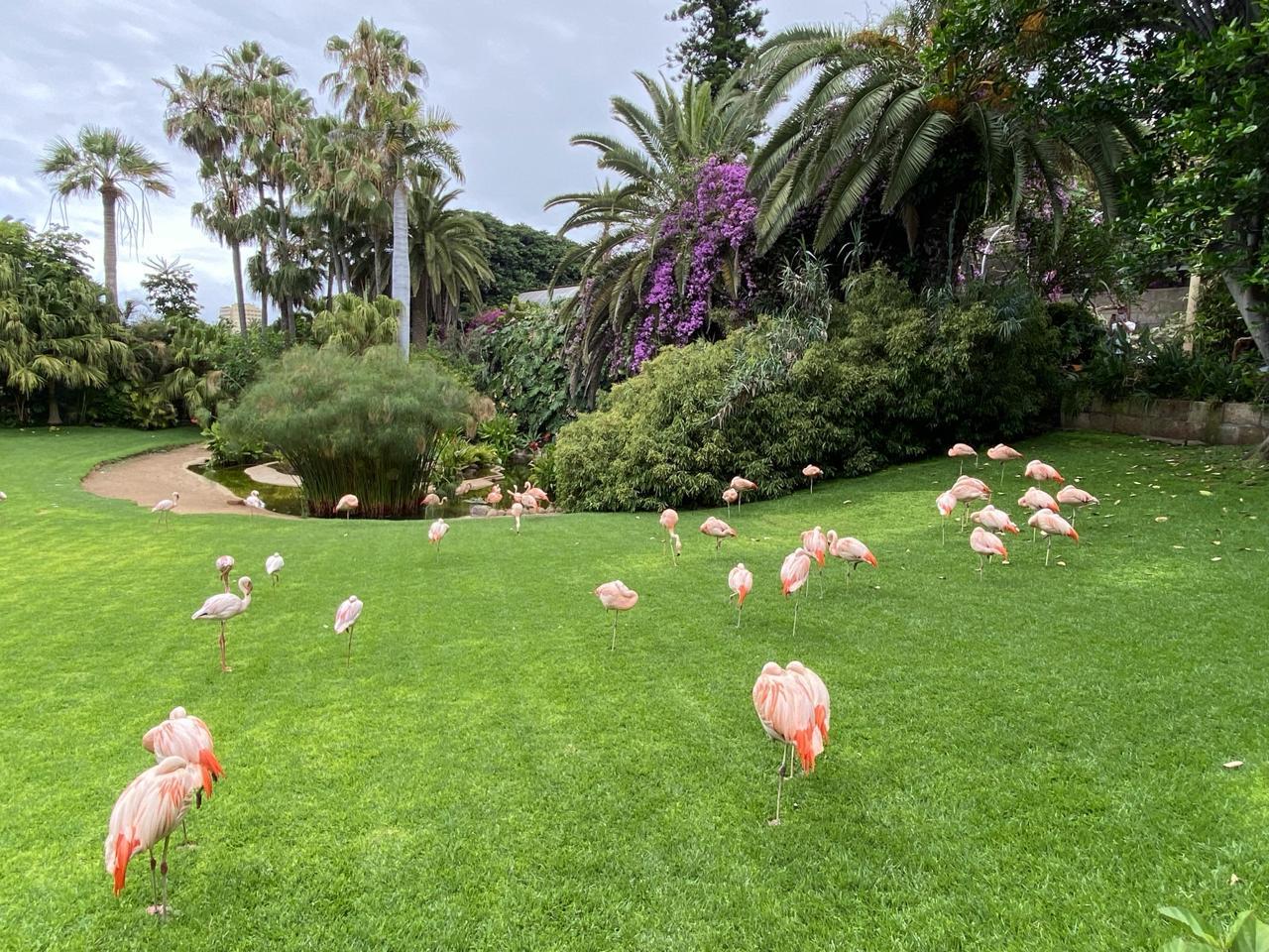tenerife loro parque flamingo