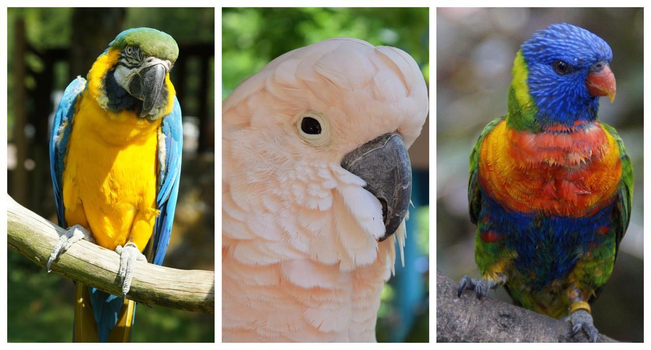 tenerife loro parque papagali